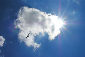 Vola lontano da me